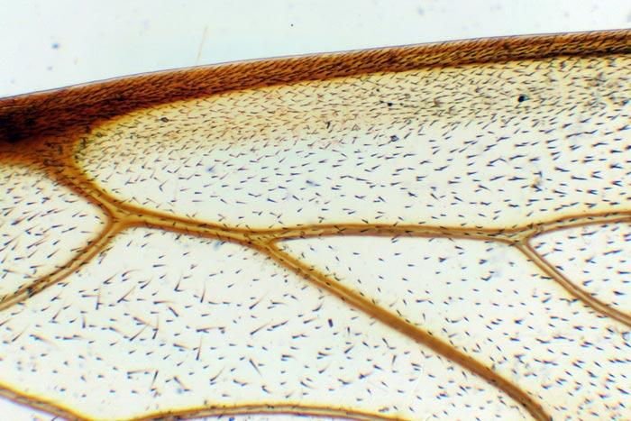 насекомые под микроскопом, насекомые под микроскопом фото, насекомые под микроскопом фото с названиями