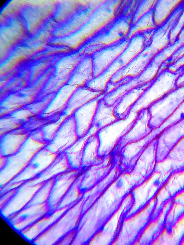 Слайд из набора для опытов K50 под микроскопом Levenhuk LabZZ M101