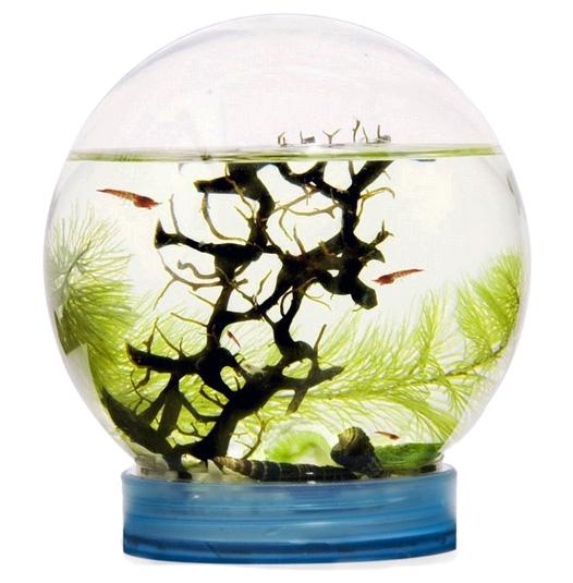 Картинка для Живая экосистема с креветками